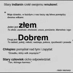 Coelhizmy