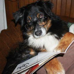 Here the dog odpowiada na pytanie czytelników.