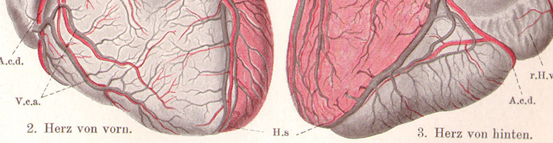 Herz partnervermittlung